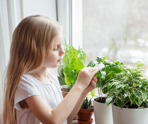 Mała dziewczynka wyciera liście roślin domowych, pielęgnacja roślin doniczkowych