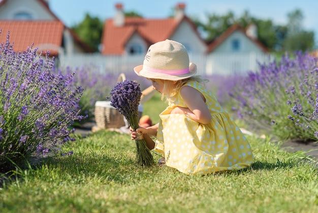 Mała dziewczynka zbiera kwiaty lawendy.