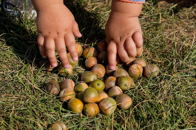 Mała dziewczynka zbiera żołędzie w jesiennym parku. zbliżenie.