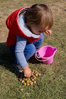 Mała dziewczynka zbiera żołędzie w jesiennym parku.