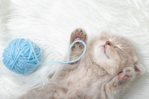 Mała imbirowa figlarka śpi na białym dywanie. sen. relaks. zbliżenie