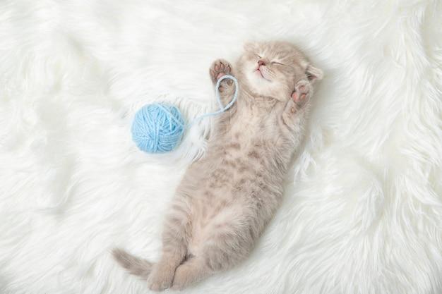 Mała imbirowa figlarka śpi na białym dywanie. sen. relaks