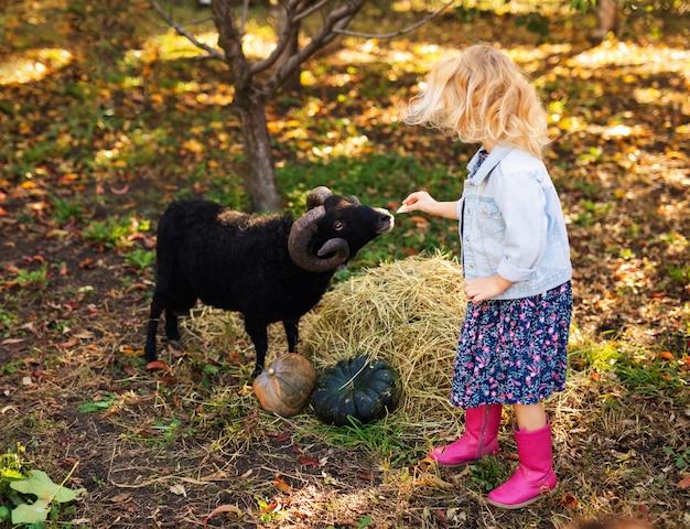 Mała kędzierzawa blondynki dziewczyna w drelichowej kurtce i różowych butach karmi czarne domowe owce. koncepcja życia rolnika