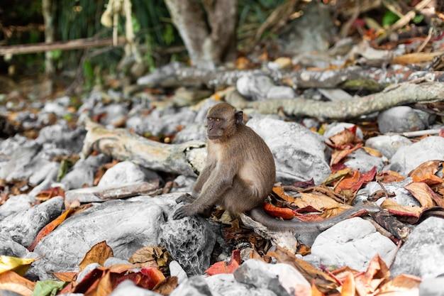 Mała małpa na tropikalnej wyspie z jej naturalnym środowiskiem.