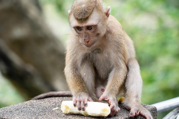 Mała małpa trzyma banana.