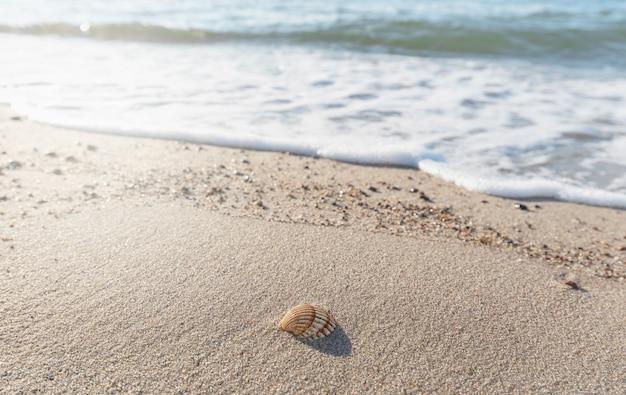 Mała muszelka na wybrzeżu bałtyku leży na piasku obmywanym przez fale