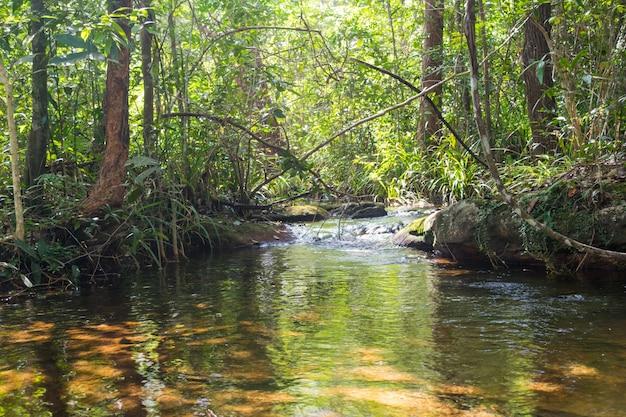Mała piękna rzeka