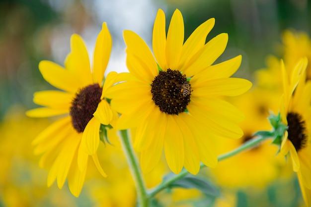 Mała pszczoła i żółty słońce kwiat