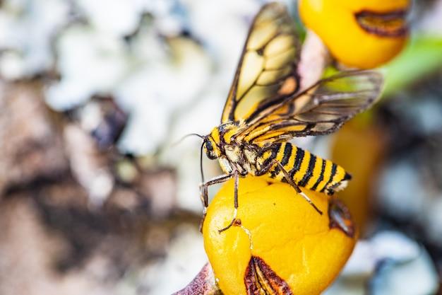 Mała pszczoła na żółtym dzikim storczykowym kwiacie