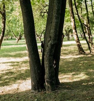 Mała puszysta wiewiórka siedzi na drzewie w parku