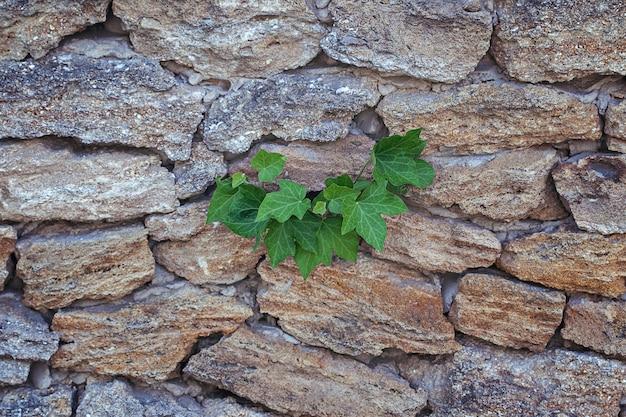 Mała roślina dorastająca przez pęknięcia między kamieni tłem