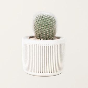 Mała roślina kaktusowa w białej doniczce