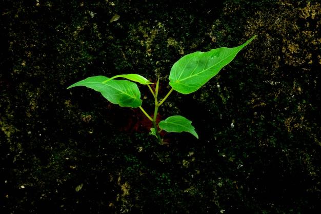 Mała roślina kiełkuje przy starym ściana z cegieł - tło
