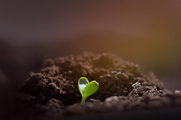 Mała roślina rośnie, koncepcja born