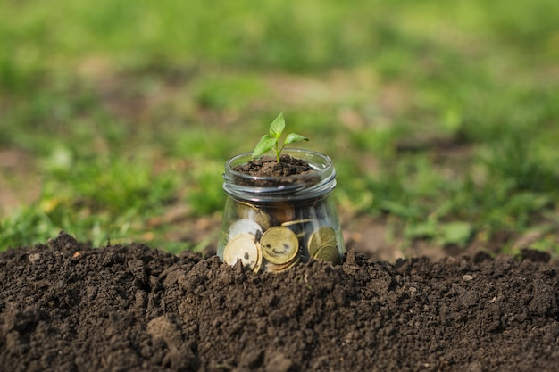 Mała roślina z monetami