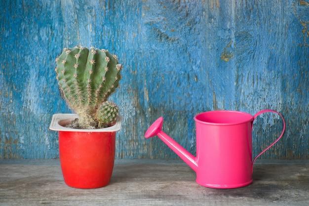 Mała różowa konewka i kaktus. niebieskie tło