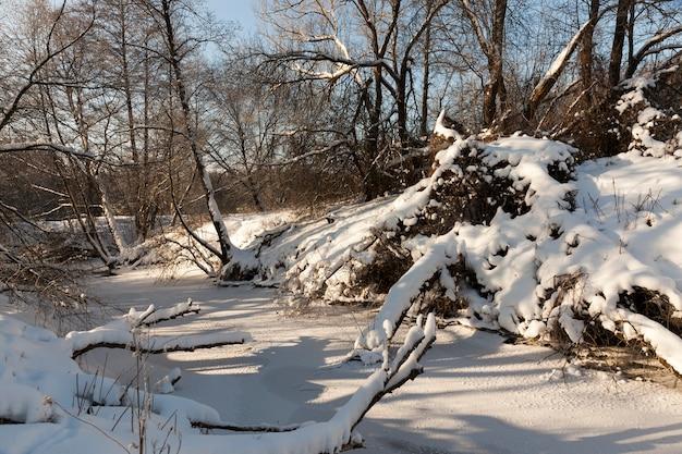 Mała rzeka, której woda jest zamarznięta zimą, zamarznięta rzeka podczas zimowych mrozów, śnieg i mróz w przyrodzie zimą w pobliżu rzeki lub jeziora
