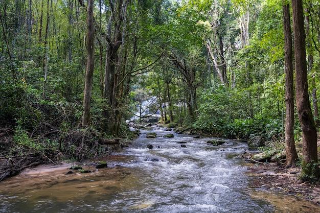 Mała rzeka otoczona drzewami w dżungli