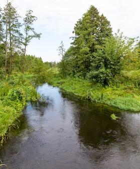 Mała rzeka przepływająca przez drzewa i lasy, wiosenny krajobraz w przyrodzie poza miastem