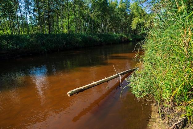 Mała rzeka w lesie w słoneczny dzień. brązowa woda z miejsca na kopię. niesamowita natura w słońcu.