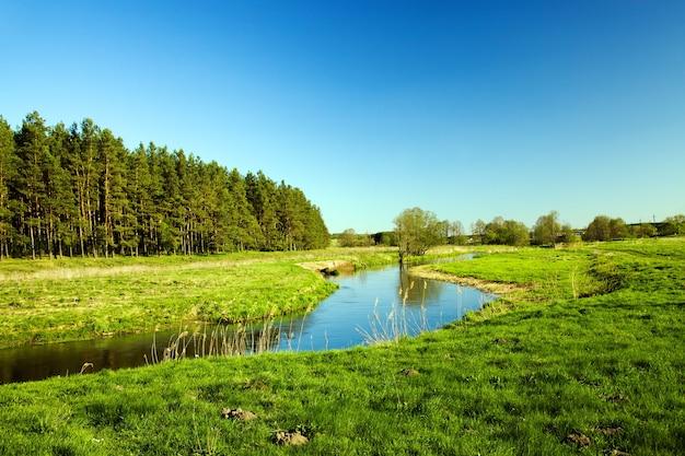 Mała rzeka w okresie letnim roku.