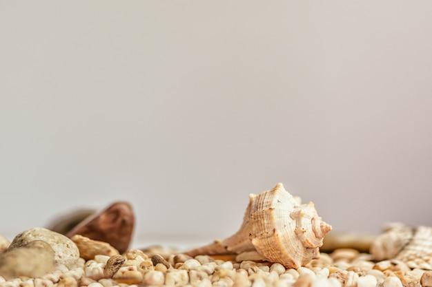 Mała seashell na piaska lata naturalnej ścianie