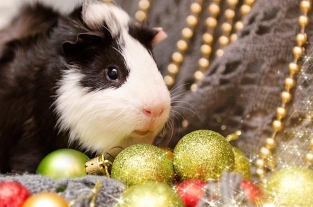 Mała śliczna królik doświadczalny w bożenarodzeniowej dekoraci.