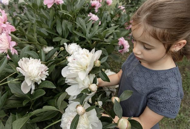 Mała słodka dziewczynka wącha krzak białych kwiatów piwonii kwitnący w ogrodzie.