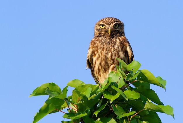 Mała sowa na górze młodego drzewa