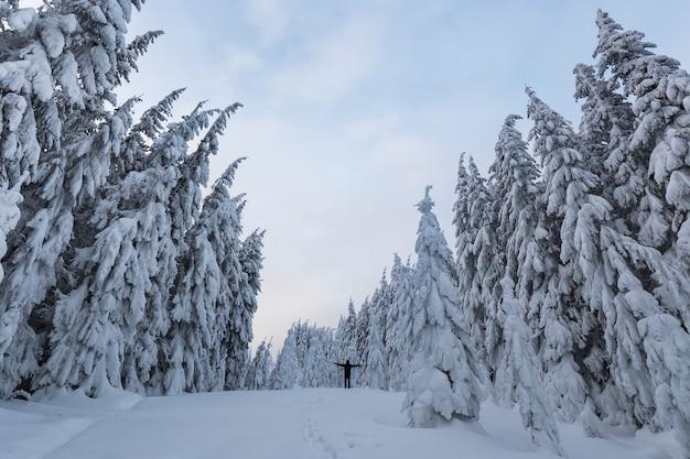 Mała sylwetka turystycznego turysty stojącego z podniesionymi rękami na zboczu góry z ośnieżonymi świerkami i bezchmurnym niebem. turystyka i zimowe sporty górskie.