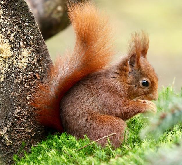 Mała wiewiórka