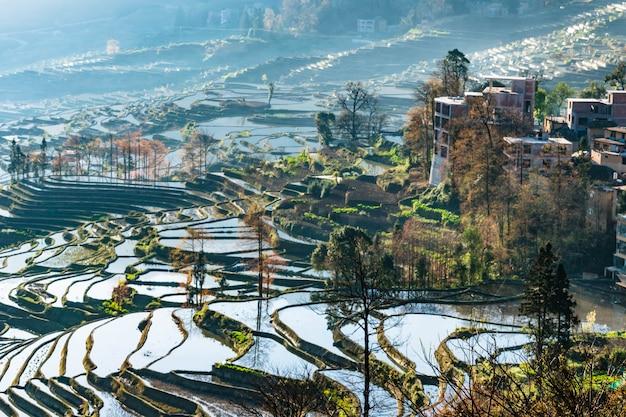 Mała wioska i tarasowaci ryżowi pola yuanyang, chiny w ranku