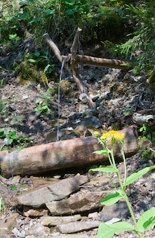Mała wiosna w letnim górskim lesie i żółty kwiat z przodu