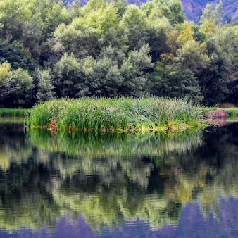 Mała wyspa trzcin na rzece z odbiciami w spokojnej wodzie. asturias. hiszpania.