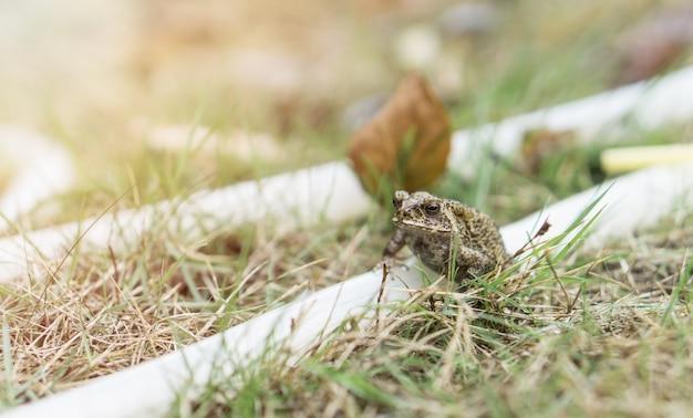 Mała żaba na gumowym zespole w parku.