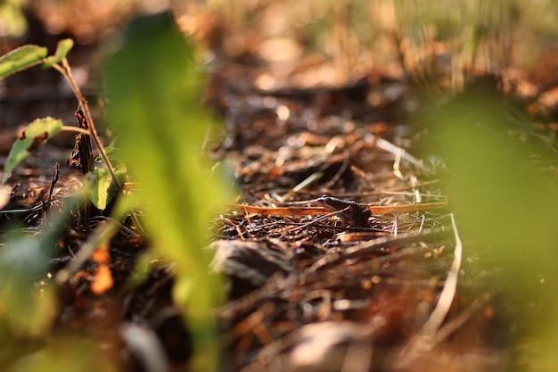 Mała żaba w trawie