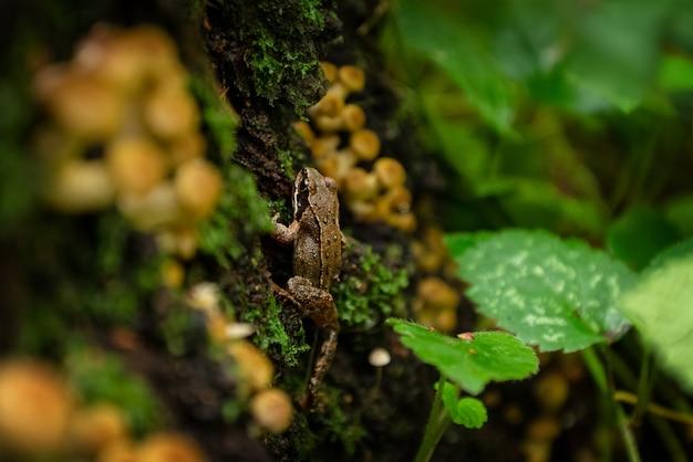 Mała żaba wspinająca się po omszałym pniu porośniętym grzybami