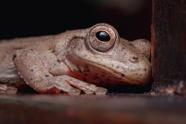 Mała żabka ukryta pod krzesłem 1
