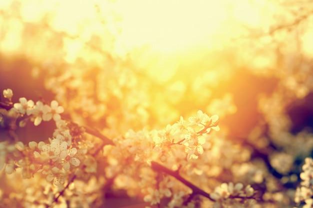 Małe białe kwiaty nasłonecznione