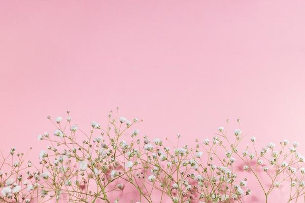 Małe białe kwitnące kwiaty na różowym tle