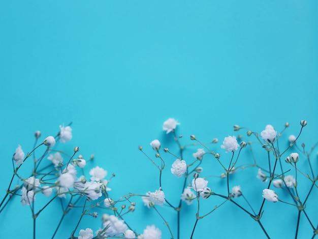 Małe białe piękne kwiaty, kompozycja na niebieskim tle. kwiaty łyszczec
