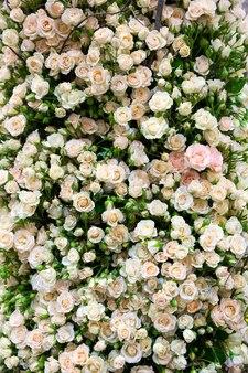 Małe białe róże zbliżenie tła