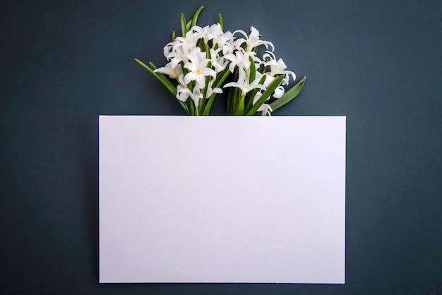 Małe białe wiosenne kwiaty chionodoxa i kawałek papieru na ciemnozielonej powierzchni