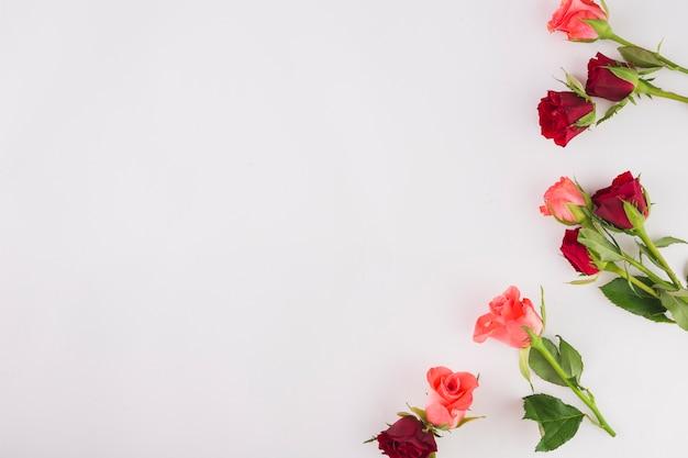 Małe bukiety róż na białym