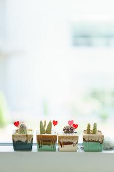 Małe doniczki z kaktusami