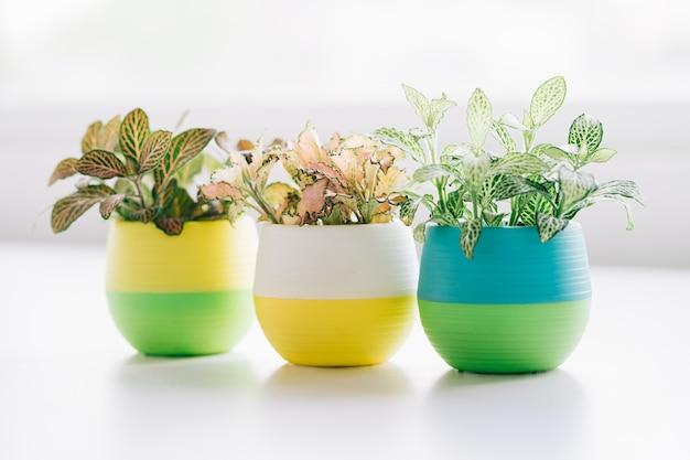 Małe doniczki z roślinami ustawione na stole do dekoracji domu