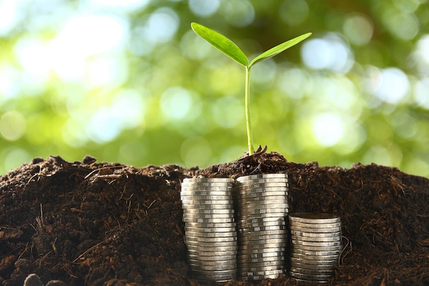 Małe drzewa na stosie monet.
