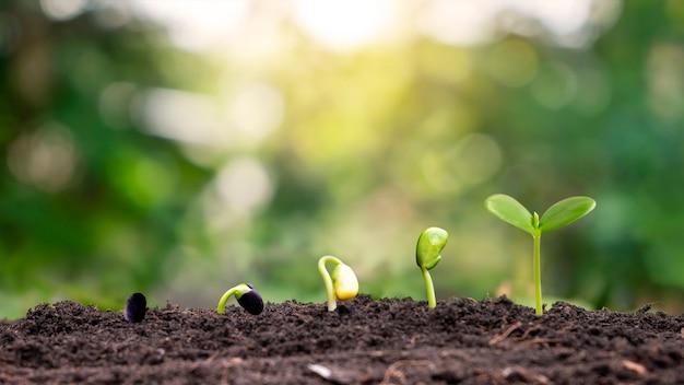 Małe drzewa o różnych rozmiarach rosnące na zielonym tle koncepcji dbania o środowisko i światowy dzień środowiska.