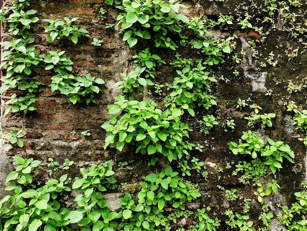 Małe drzewa rosną na starym betonowym murze