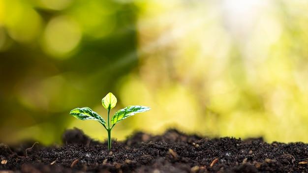 Małe drzewa rosnące na ziemi w porannym świetle na niewyraźnej naturze.